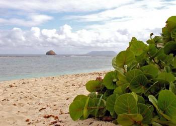 île de la Désirade