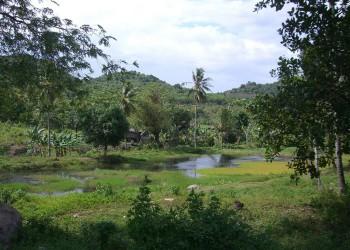 Makassar
