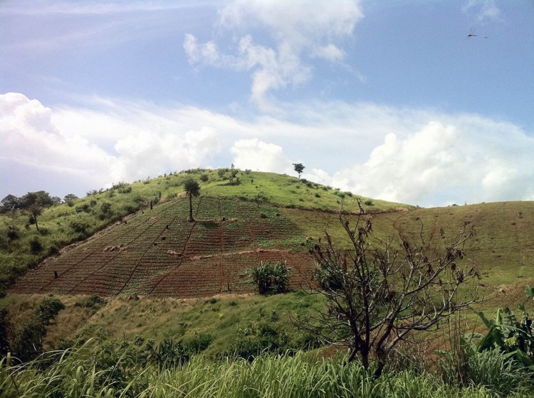 Les tribus vivant dans la jungle cultivent le riz sur des plantations en terrasse.