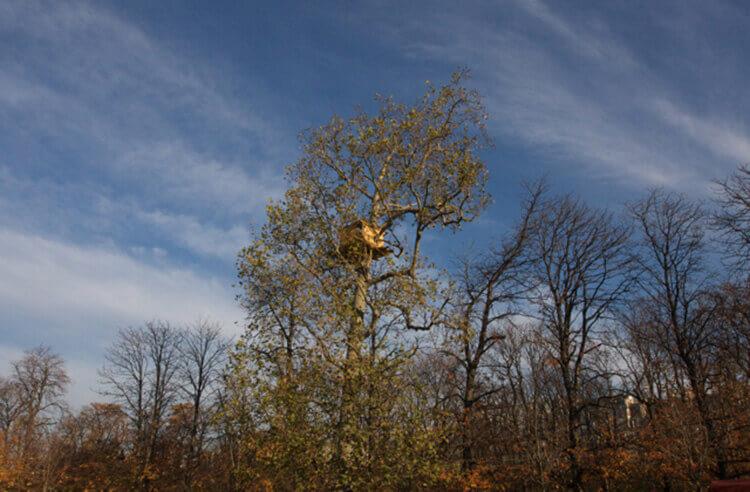 Week end insolite : Cabane dans les arbres très haut perché