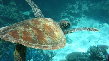 Plonger dans la grande barrière de corail