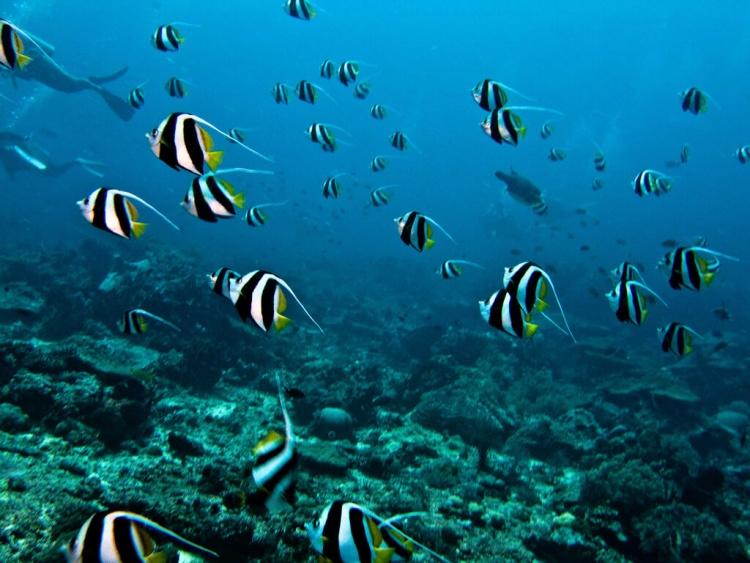 Plongée sous-marine à Bali