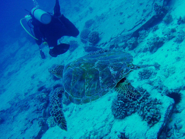 Plonger à Hawai