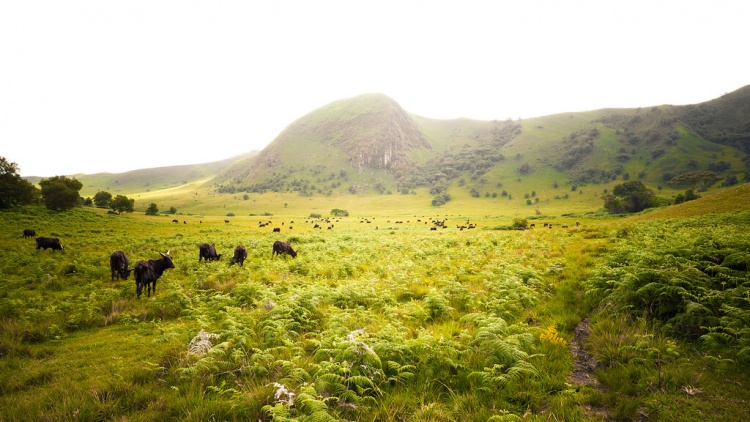 Safari en afrique au cameroun