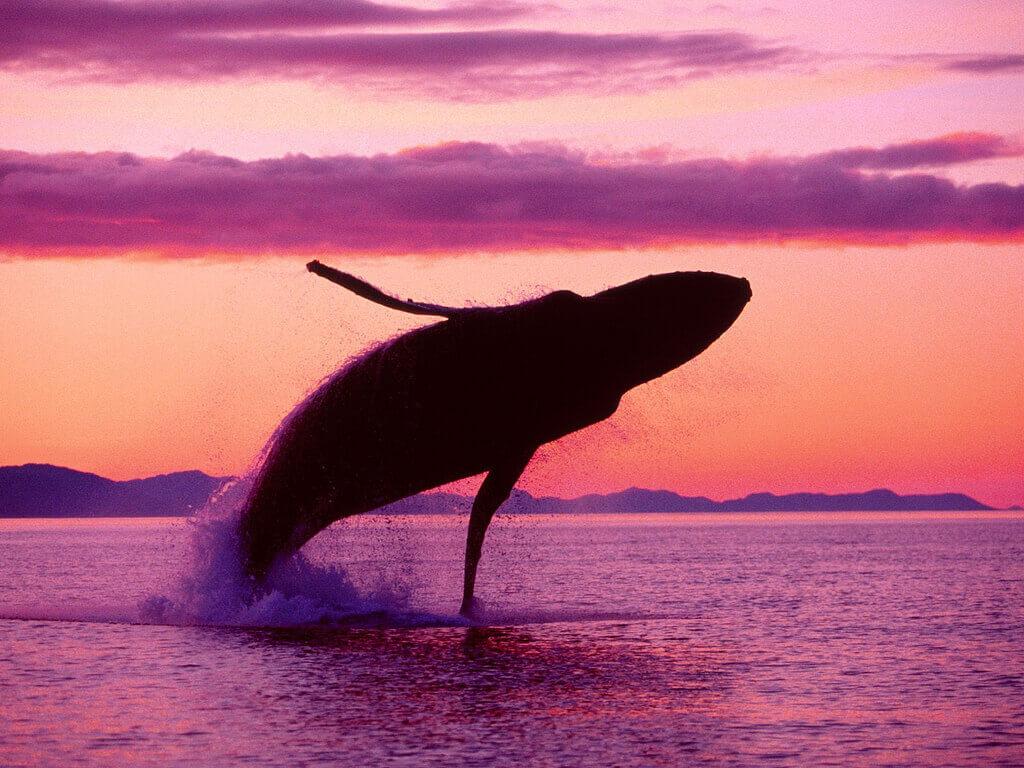 baleine-coucher-soleil