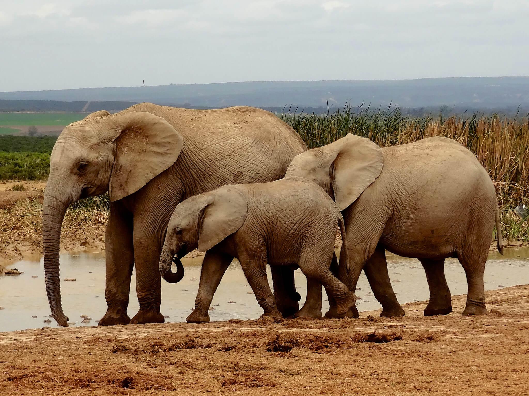 Voir des animaux en afrique du sud quelle r serve ou parc - Quel est le plus grand port d afrique ...