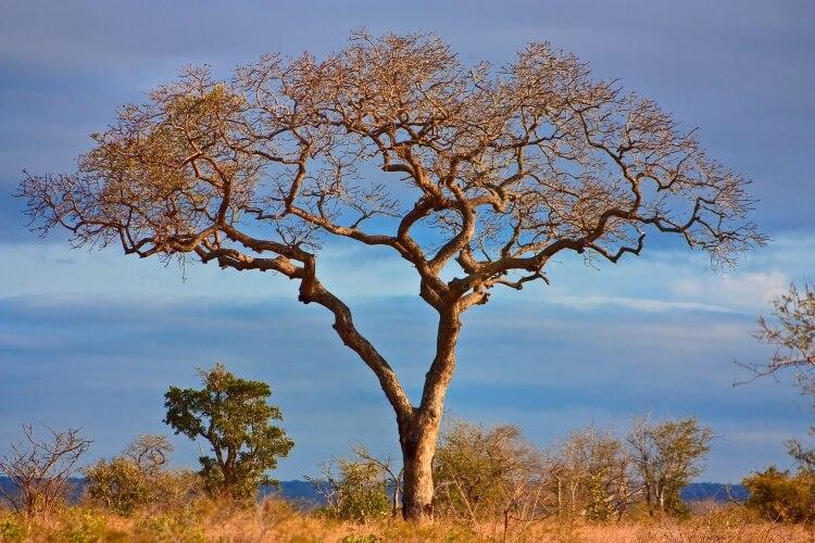 afrique-du-sud-parc-kruger