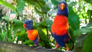 Une faune et une flore hors du commun, c'est la Guadeloupe qui vous appelle !