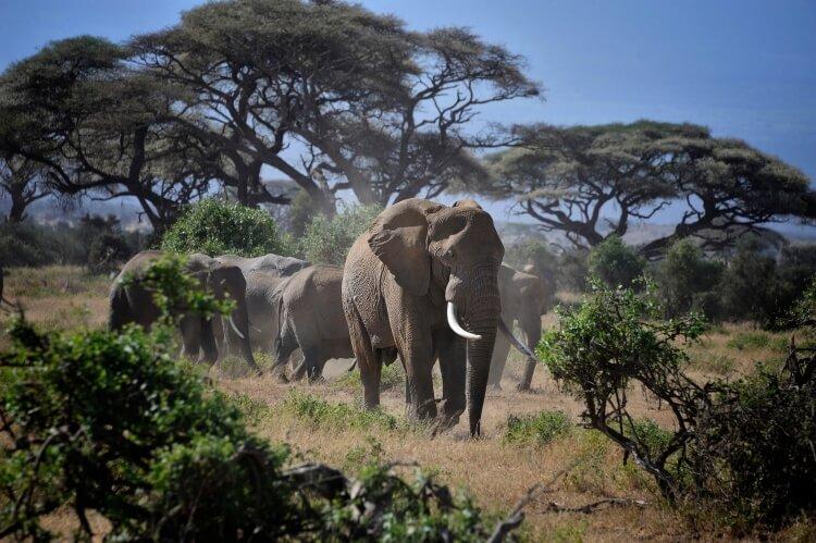 Des souvenirs impérissables pour vos enfants (photo au Amboseli National Park au Kenya)