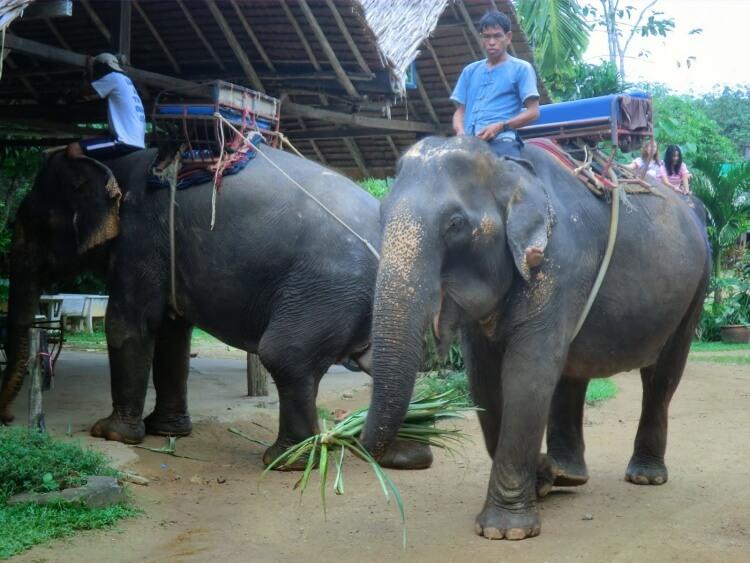 Deux éléphants prêts pour une balade