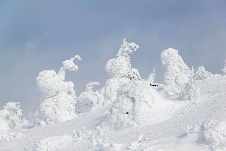 Arbres recouverts de neige