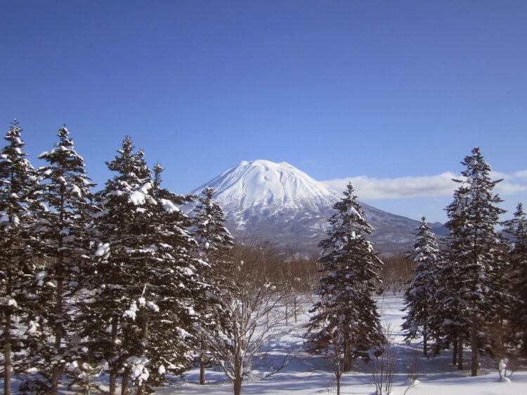 Sapins et mont Yotei