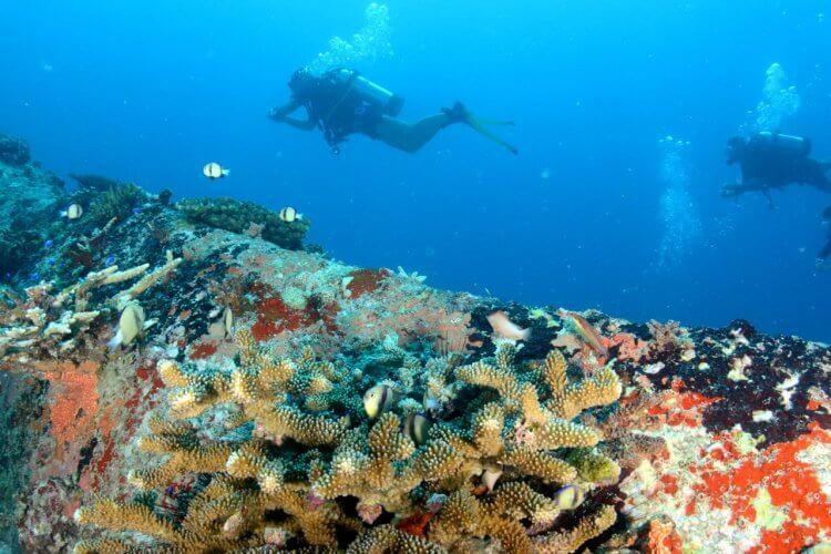 Les récifs coralliens, avec ses couleurs chatoyantes, est un endroit foisonnant de vie.