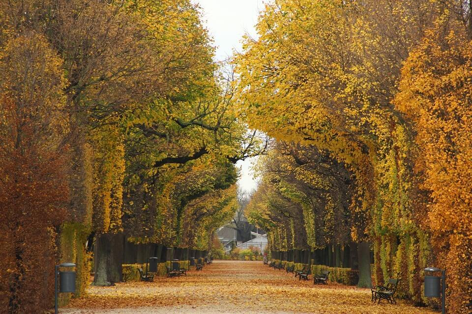 Espace vert à Vienne