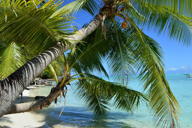 Tahiti regorge de nombreuses infrastructures telles que les bungalows les pieds dans l'eau