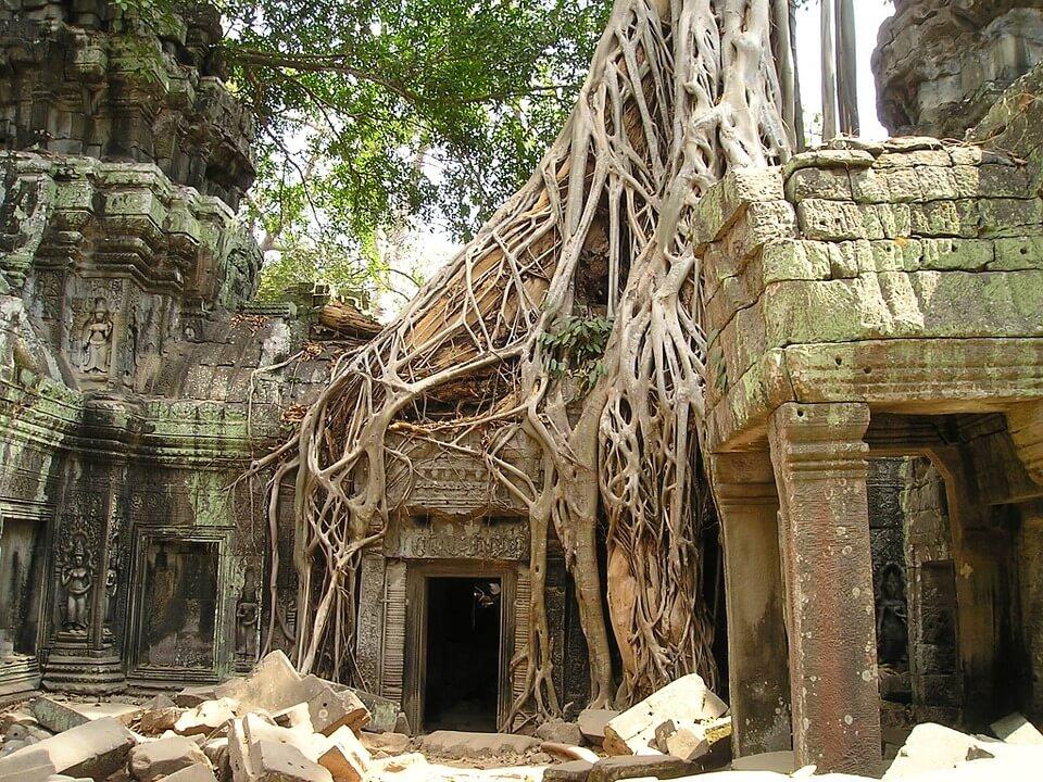 racines des arbres recouvrant les ruines d'Angkor