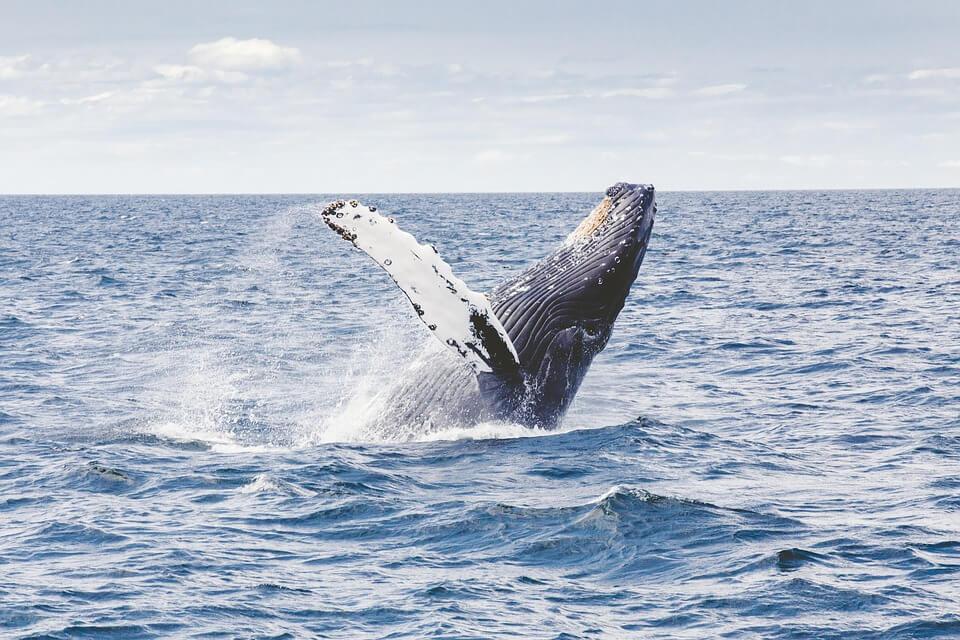 baleine dans l'eau animaux nouvelle zelande
