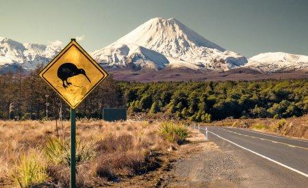 route néozélandaise panneau kiwi animaux nouvelle zelande
