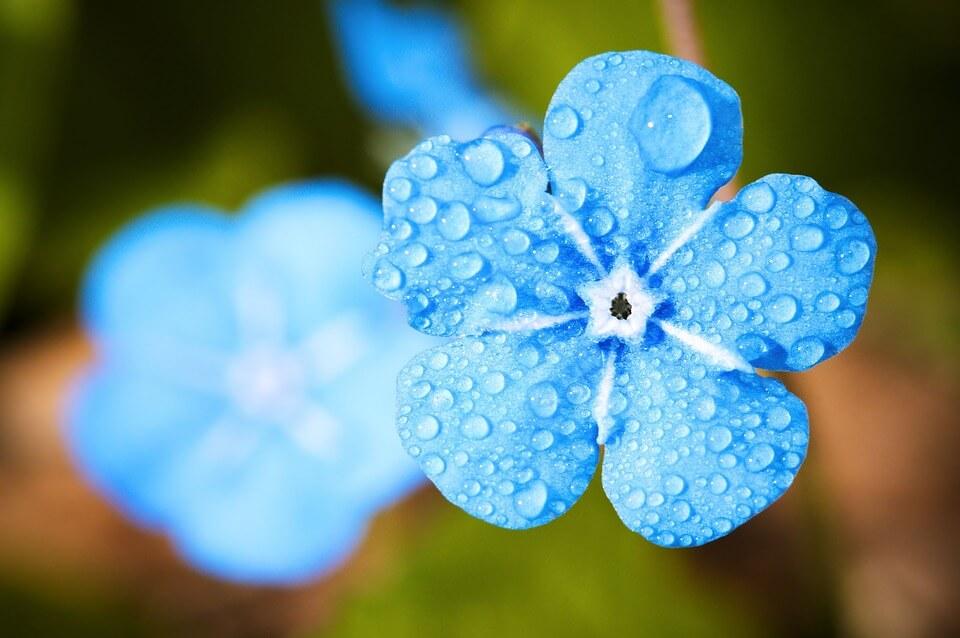 fleur sous la pluie, saison des pluies aux philippines
