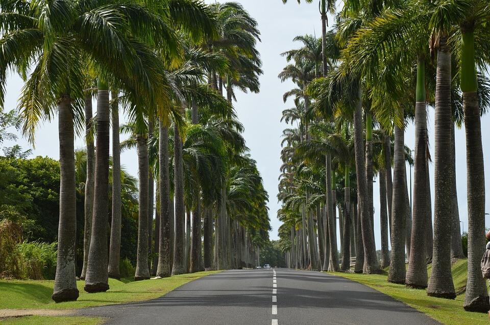 palmiers saison des pluies en guadeloupe
