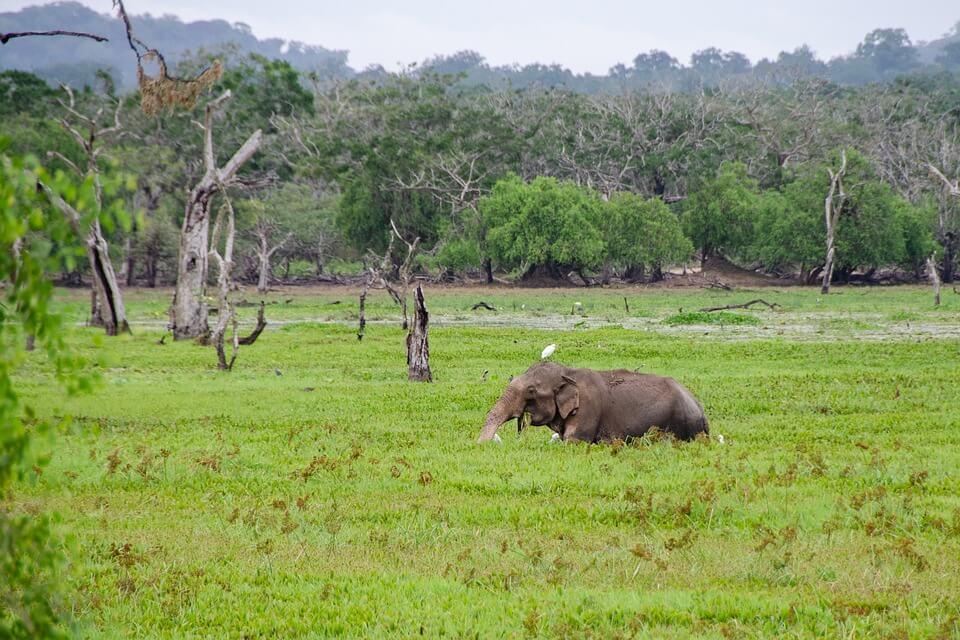 éléphant safari au sri lanka