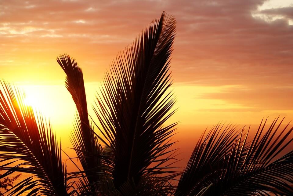 saison des pluies reunion palmier