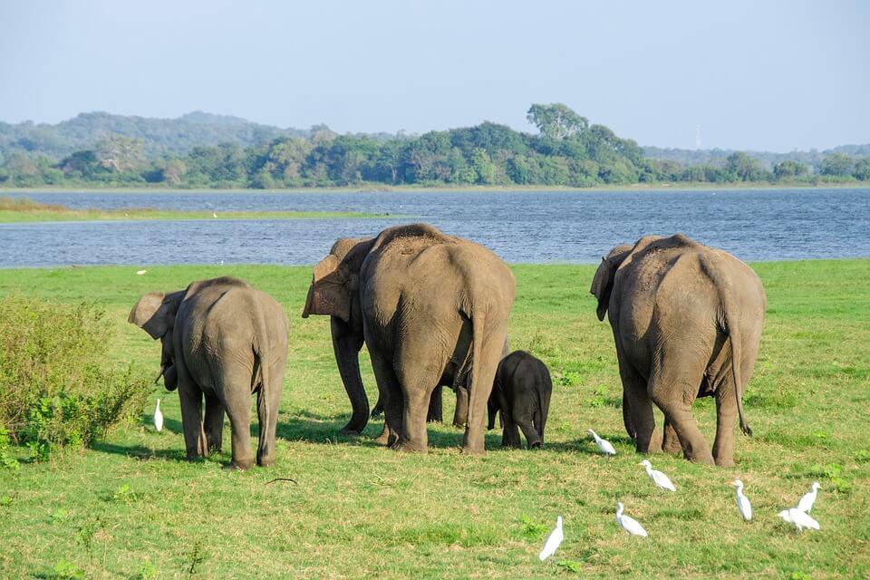 safari au sri lanka
