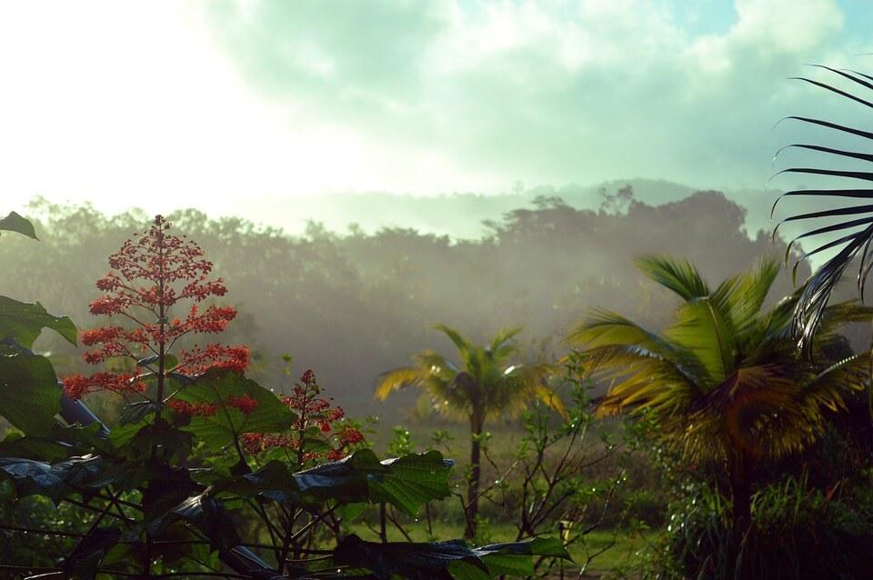 saison des pluies en guyane