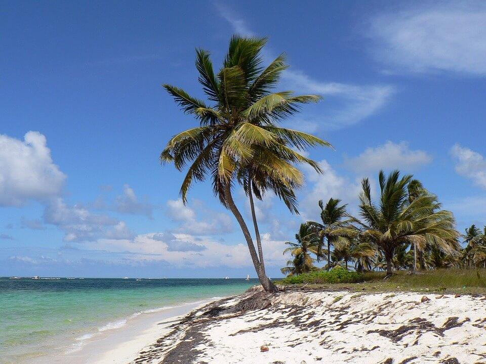 climat à punta cana, palmier plage eau turquoise
