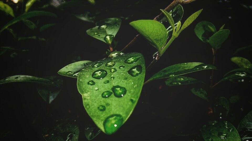 feuille pluie