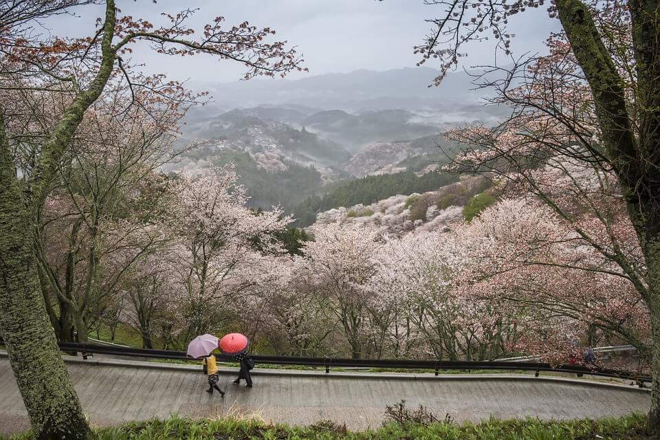 japonais parapluie paysage montagne saison des pluies japon