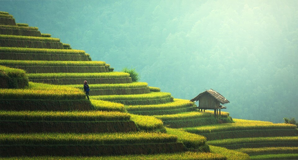 rizière a bali