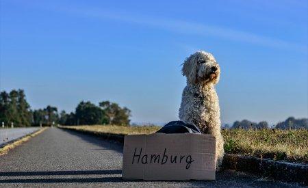 chien qui fait du stop voyager à l'étranger avec son chien