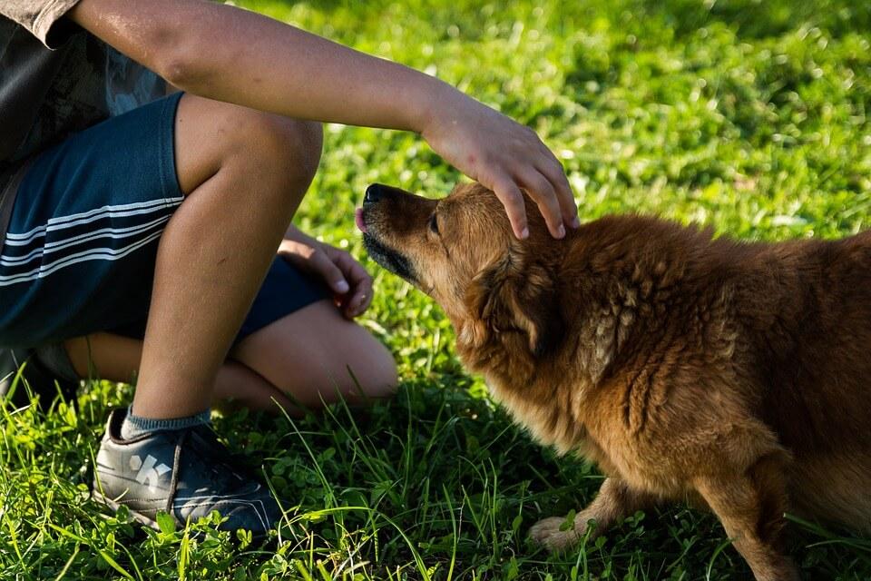 maitre et chien caresse jeu