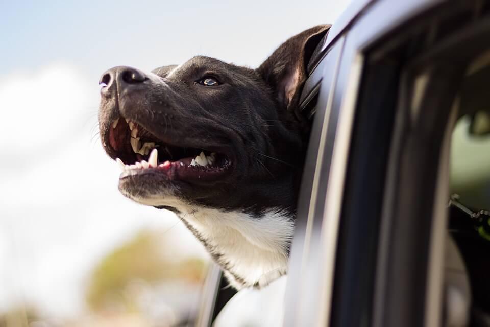 chien dans la voiture voyager à l'étranger avec son chien