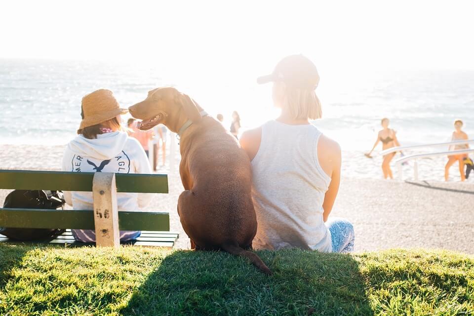 plage voyager à l'étranger avec son chien