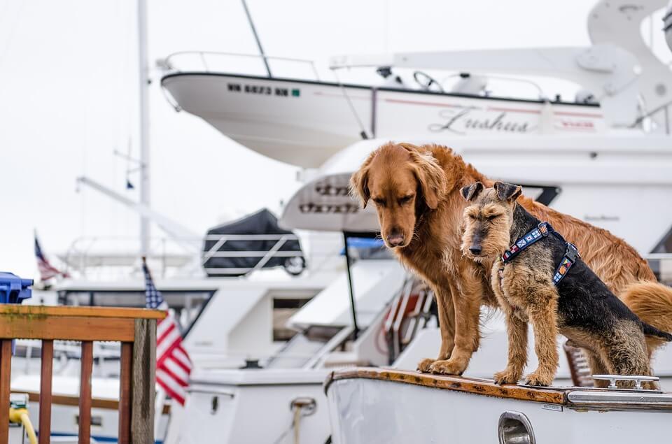 voyager à l'étranger avec son chien en bateau