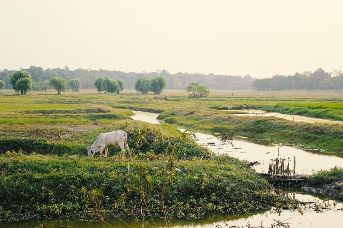 paysages birmanie animal