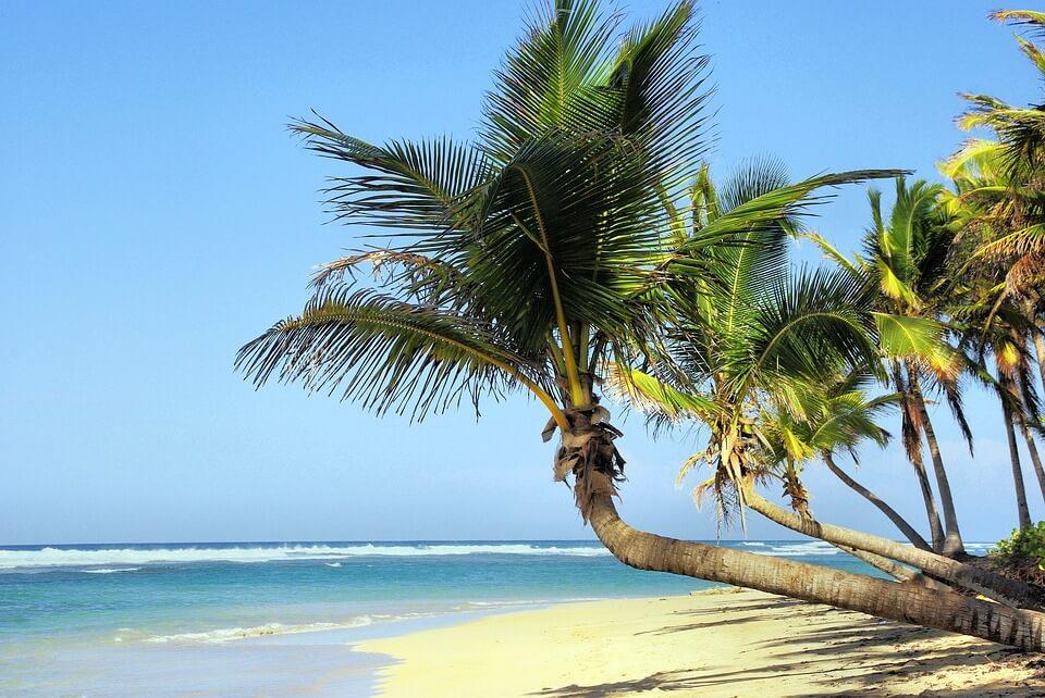 cuba ou mexique palmiers varadero