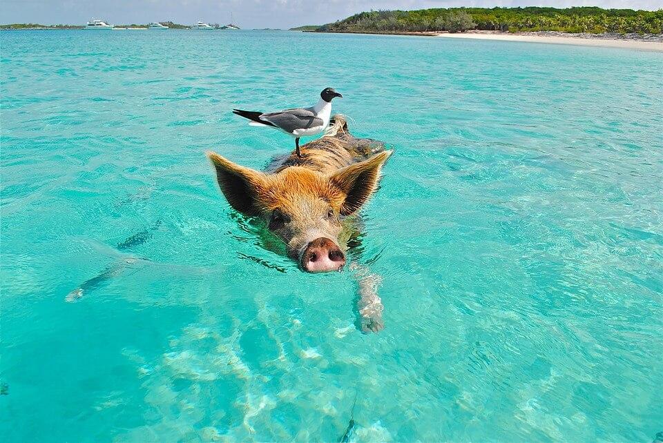 exuma cochon eau bahamas îles paradisiaques du monde