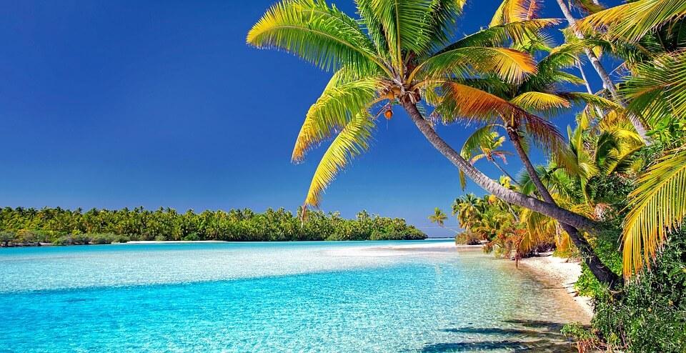 îles cook cocotier mer îles paradisiaques du monde