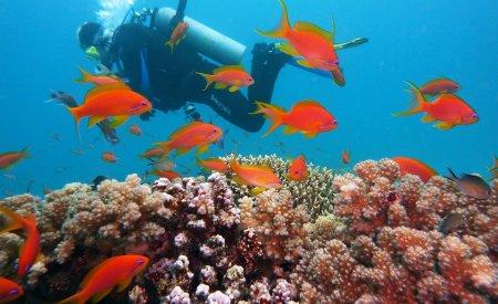 plongeurs poissons rouges réserve cousteau en guadeloupe