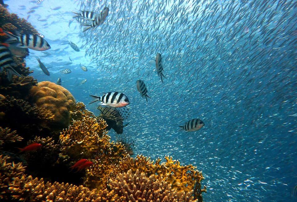 poissons fond marins coraux réserve cousteau en guadeloupe