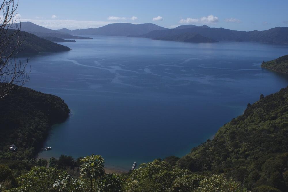 Marlborough Sounds, passage obligé de certaines espèces de cétacés pendant leur migration en juin et en juillet, est une destination à privilégier, si on veut observer la baleine en Nouvelle-Zélande.