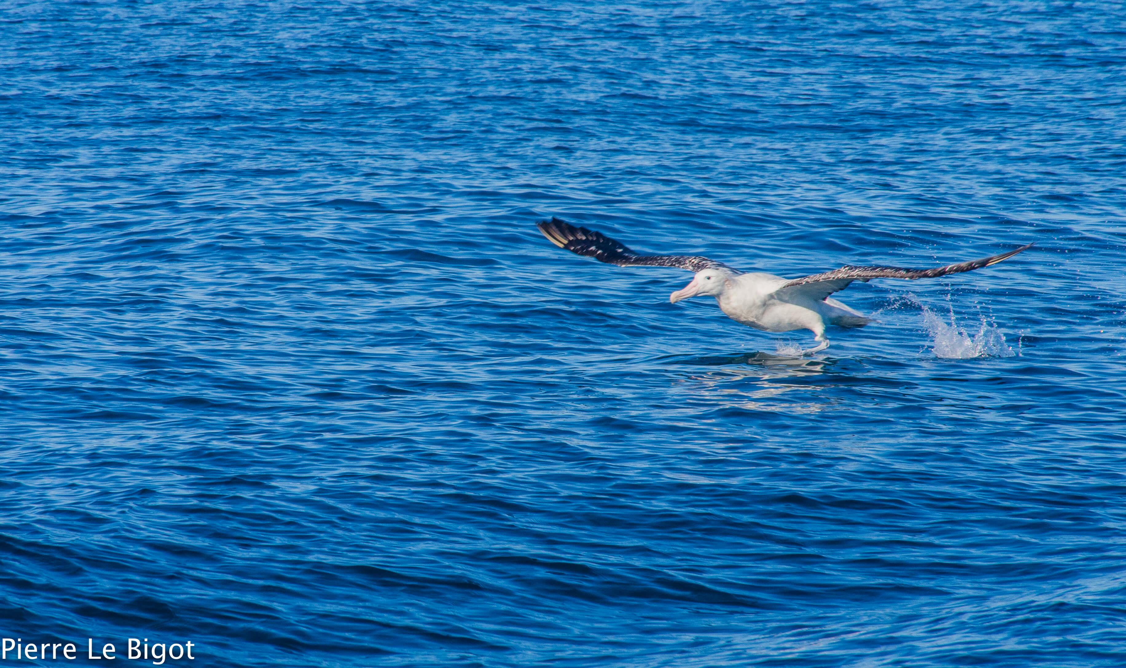 Pour voir la baleine en Nouvelle-Zélande, privilégiez certains sites qui sortent du lot, grâce à la grande probabilité d'y rencontrer des cétacés comme les cachalots et les baleines à bosse, sans oublier les mouettes.