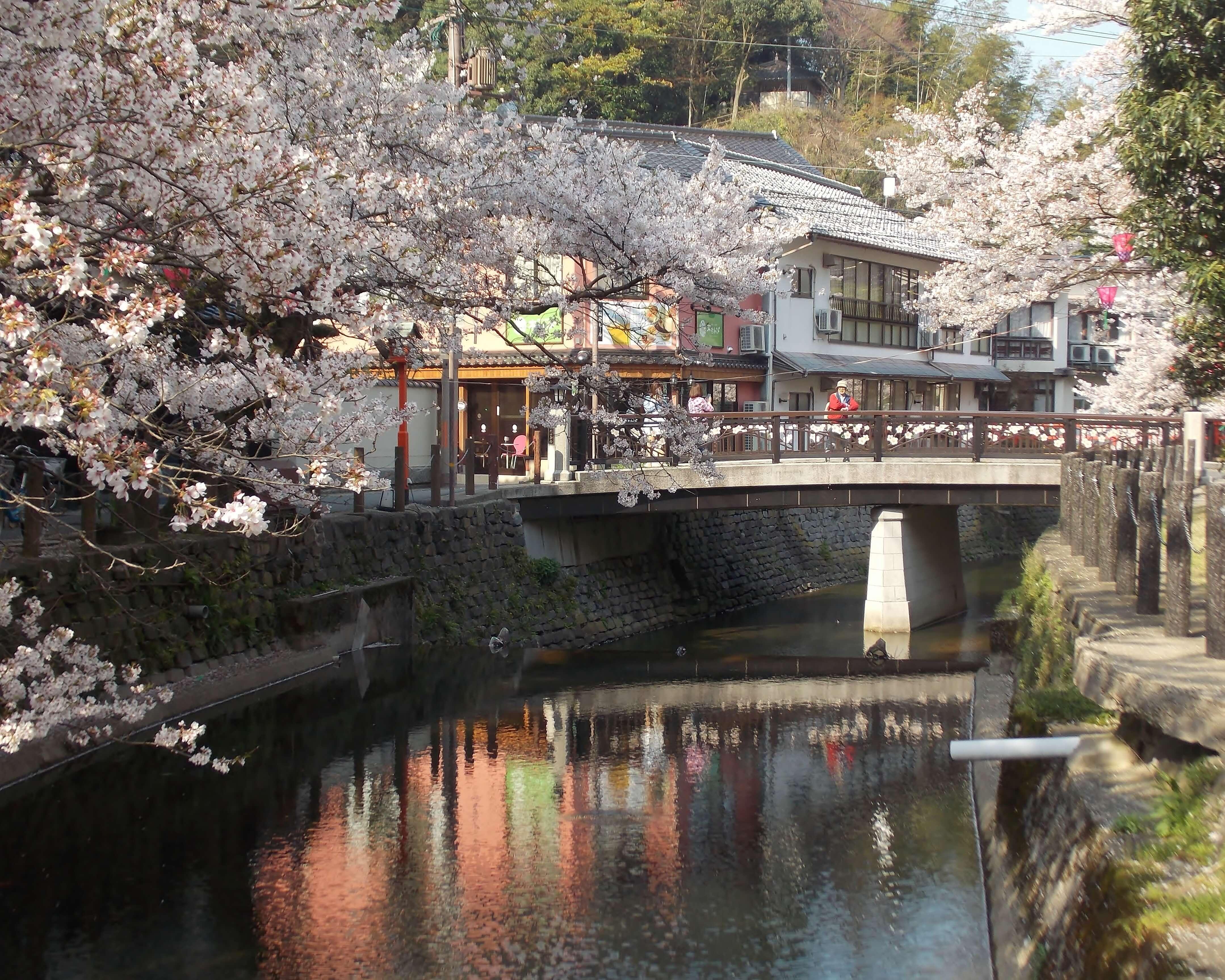 Que faire à Tokyo au printemps ? Prendre le temps de respirer la sérénité et fêter le Hanami, la célébration de la floraison des sakuras, magnifiques cerisiers ornementaux.