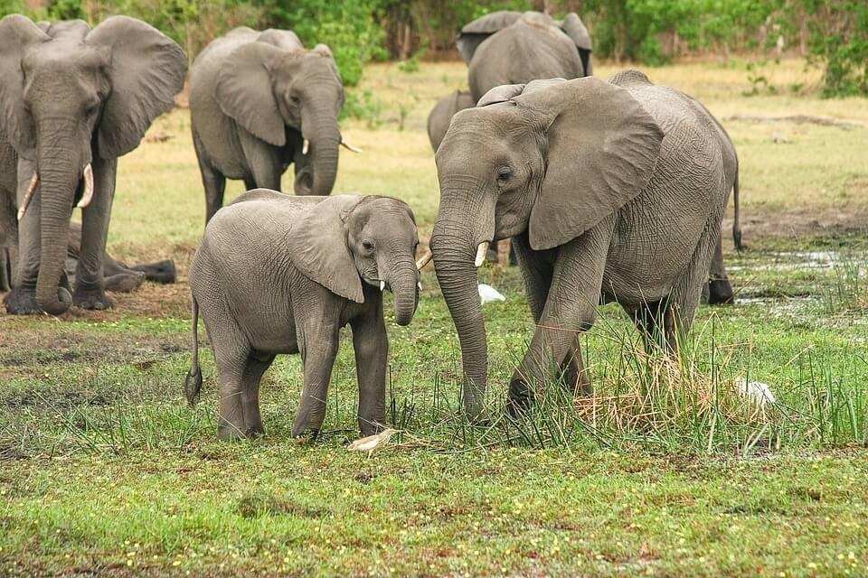 Safari afrique du sud pays chauds en janvier