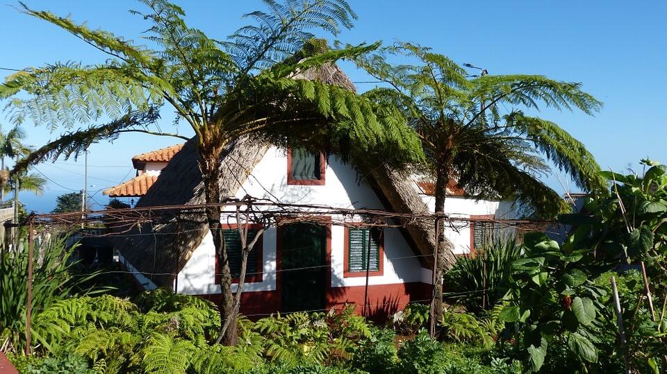 maison typique madere vegetation