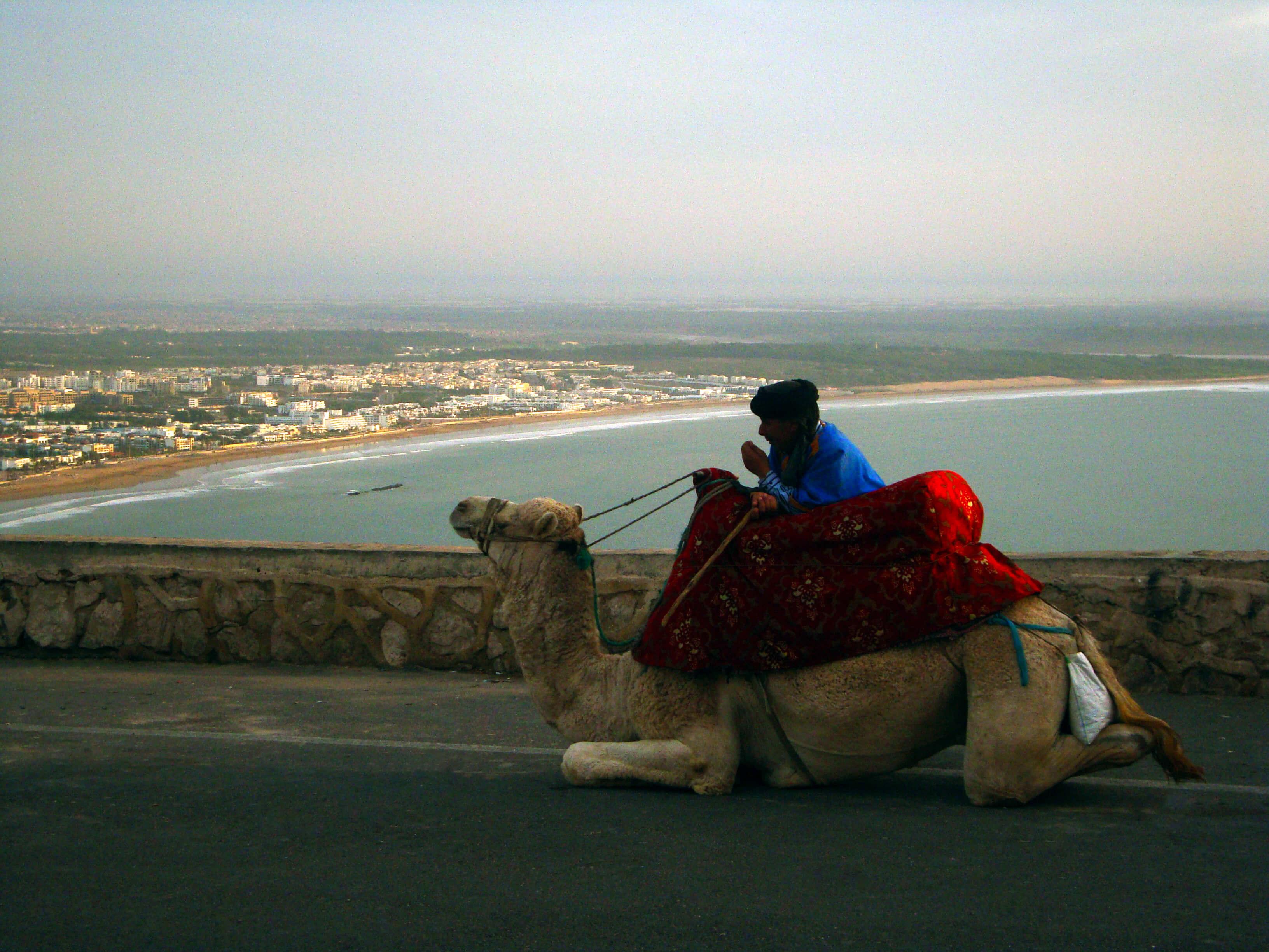 La promenade à dos de chameaux est une activité incontournable, surtout si on aime le caractère exotique de la balade.
