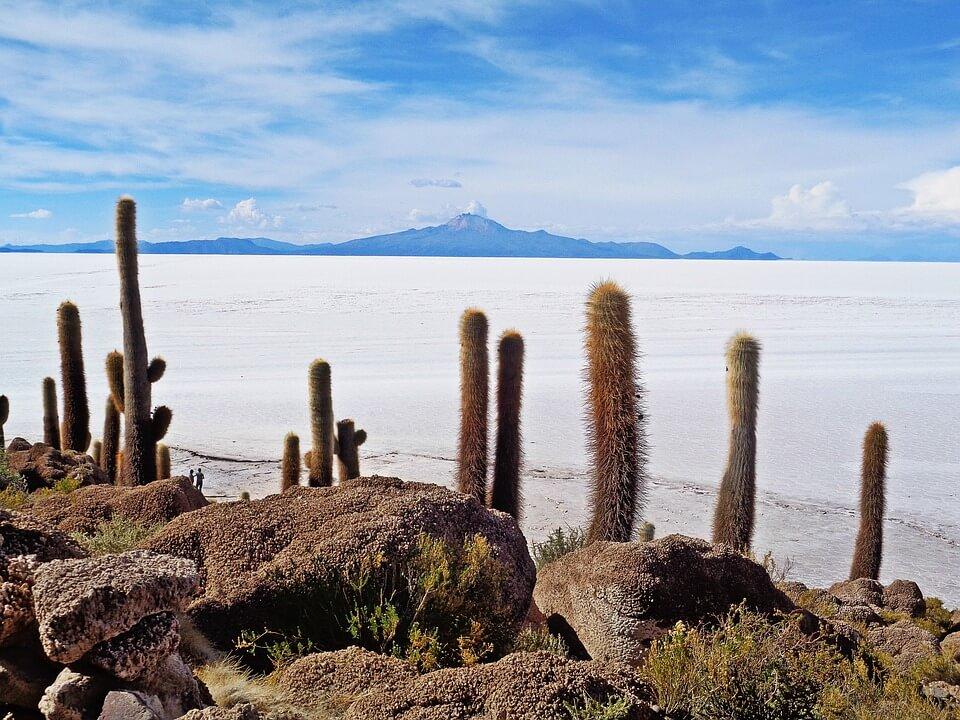 cactus désert de sel en bolivie